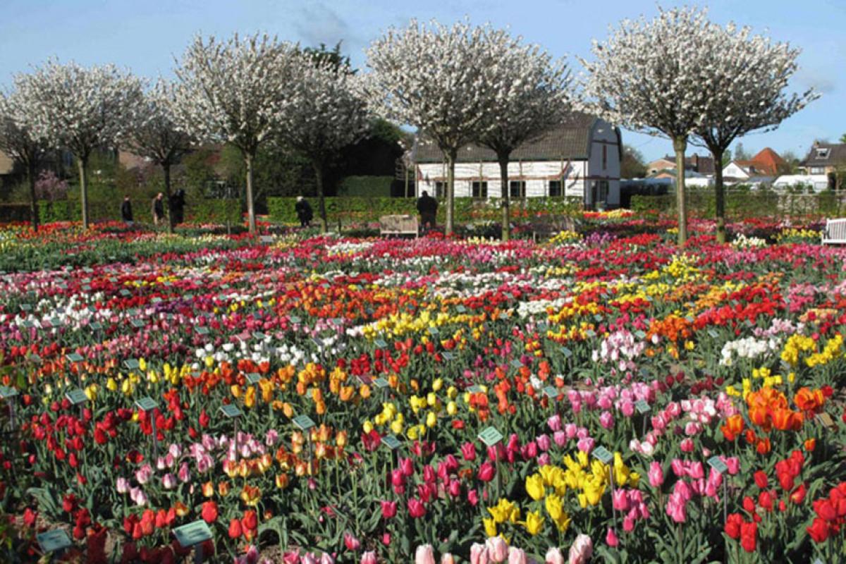 Hortus Bulborum, historische bloementuin