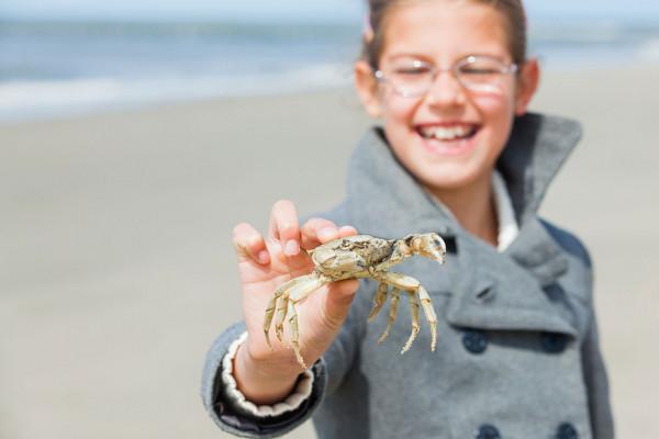 Muscheln suchen am Strand