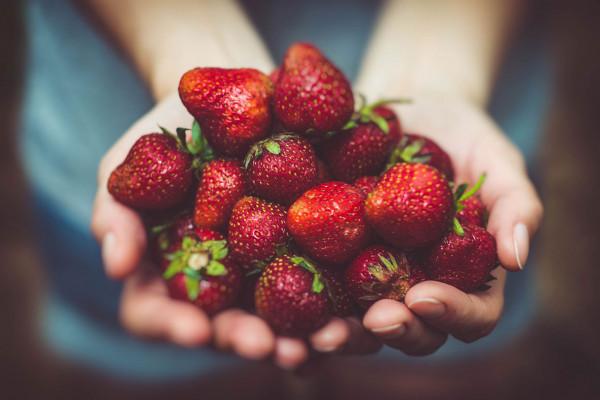 Holländische Erdbeeren